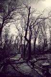 Dunkler Forest Way Lizenzfreie Stockfotos