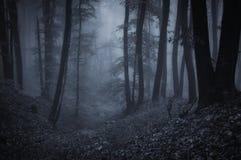 Dunkler furchtsamer Wald mit Nebel nachts Stockfotos