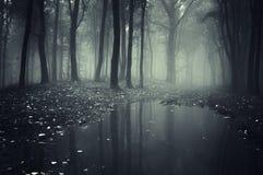 Dunkler gespenstischer Wald mit mysteriösem Nebel und See