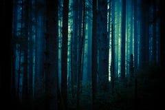Dunkler gruseliger Wald stockfotos