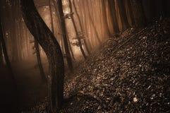 Dunkler gruseliger Wald mit rotem Nebel auf Halloween Stockfoto