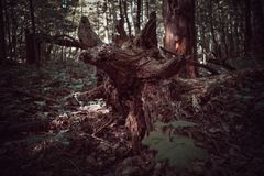 Dunkler h?lzerner Baum-Stamm, der in Wald legt stockbild