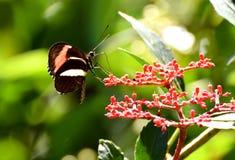 Dunkler kleiner Schmetterling stockfotografie