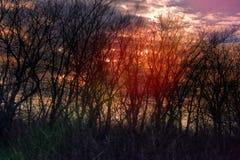 Dunkler magischer Wald lizenzfreie stockfotos