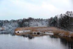 Dunkler myst Winterwald auf der Flussbank und dem getrockneten gelben Gras lizenzfreie stockfotografie