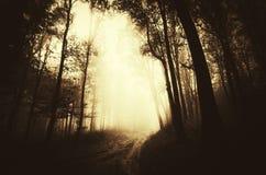 Dunkler mysteriöser Wald der Wegabflussrinne mit Nebel Stockfoto