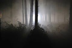 Dunkler Nachtwald in einem Nebel 02 Stockfotografie