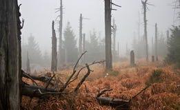 Dunkler nebelhafter Wald Stockfotos