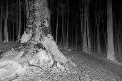 Dunkler negativer Baum mit großen Wurzeln in den Wald Stockbild