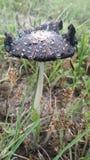 Dunkler Pilz Stockbilder