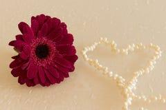Dunkler rosa Gerbera mit waterdrops und Herzen von Perlen Stockfotografie