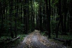 Dunkler schwermütiger nebelhafter schwerer Waldweg mit vielen Bäumen stockbilder