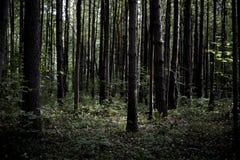 Dunkler schwermütiger nebelhafter schwerer Waldweg mit vielen Bäumen lizenzfreie stockfotos