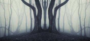 Dunkler symmetrischer Wald mit merkwürdigem enormem Baum und mysteriösem Nebel Stockbild