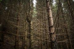 Dunkler und mysteriöser Wald Lizenzfreie Stockbilder