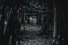 Dunkler Wald lizenzfreie stockfotografie