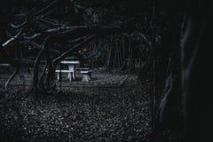 Dunkler Wald stockbild