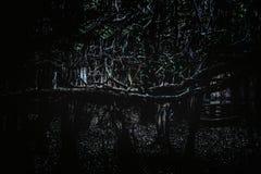 Dunkler Wald lizenzfreies stockfoto
