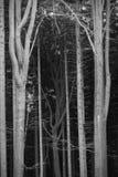 Dunkler Wald Stockfotografie