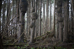 Dunkler Wald Lizenzfreies Stockbild