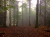 Dunkler Wald Lizenzfreie Stockfotos