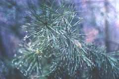 Dunkler Wald Stockbilder