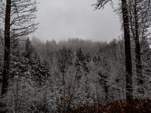 Dunkler Wald bedeckt im Schnee lizenzfreie stockfotos