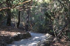 Dunkler Wald im Fall Stockfotografie