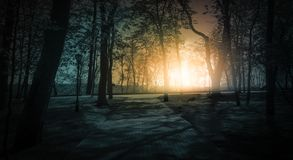 Dunkler Wald, Strahlen des Sonnenlichts durch die Bäume, ein magischer Wald lizenzfreie stockfotos