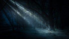 Dunkler Wald, Strahlen des Sonnenlichts durch die Bäume, ein magischer Wald stockfoto