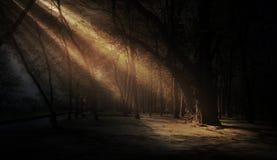 Dunkler Wald, Strahlen des Sonnenlichts durch die Bäume, ein magischer Wald stockfotografie