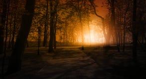 Dunkler Wald, Strahlen des Sonnenlichts durch die Bäume, ein magischer Wald lizenzfreies stockbild