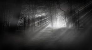Dunkler Wald, Strahlen des Sonnenlichts durch die Bäume, ein magischer Wald lizenzfreies stockfoto