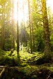 Dunkler Waldboden im Gegenlicht Stock Foto