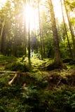 Dunkler Waldboden im Gegenlicht Royalty-vrije Stock Foto
