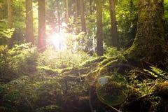 Dunkler Waldboden im Gegenlicht Stock Foto's