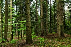 Dunkler Waldhintergrund stockfoto