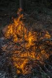 Dunkles Hintergrundfeuer von den Niederlassungen Flamme und Funken lizenzfreie stockfotos