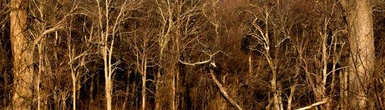 Dunkles Holz Stockfoto