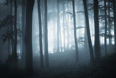 Dunkles Holz mit blauen Nebel- und Baumschattenbildern Lizenzfreies Stockbild