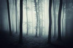 Dunkles Holz mit blauen Nebelabflussrinnenbäumen auf Halloween Stockbilder
