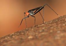 Dunkles Insekt Stockbild