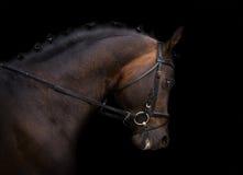 Dunkles Pferd Stockfoto