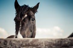 Dunkles Pferd hinter dem Zaun Lizenzfreie Stockfotos