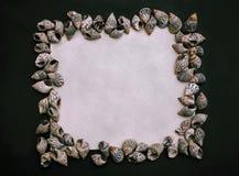 Dunkles Quadrat flatlay mit weißem Kopienraum der Muschel lizenzfreie stockfotos