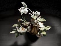Dunkles Winterroses im goldenen Vase lizenzfreie stockbilder