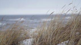 Dunne beach-grass die in wind tijdens een de winteronweer golven stock footage
