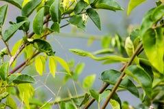Dunne groene slang Royalty-vrije Stock Afbeeldingen