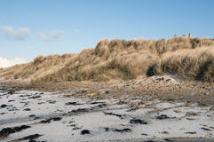 Dunnet sand dunes Royalty Free Stock Photo