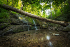 Dunnfield Creek in New Jersey. Clear water and a fallen log over a small creek in New Jersey stock photo